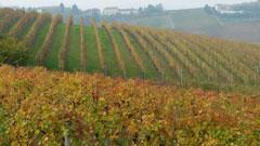 Giggi Rosso Piemont