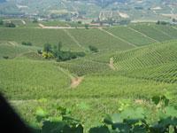 Primitivo Apulien, Rotwein Italien