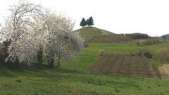 Rotwein Barbera Piemont