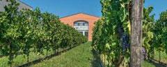 Rotwein-Italien Amarone Cantina-Bennati Valpolicella Wein-Italieno